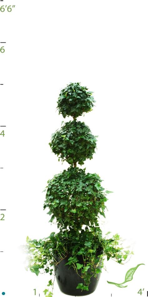 topiary styles topiary style flowers and floral images