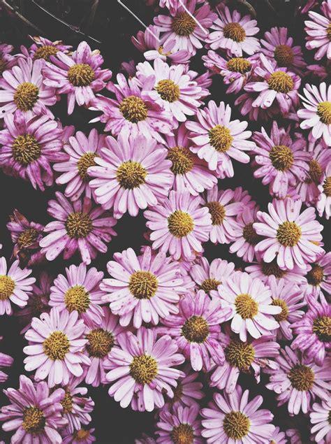 imagenes tumblr flores flores tumblr imagui