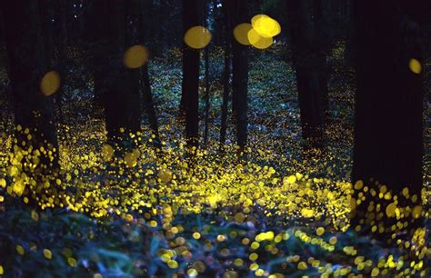 Chaising Fireflies chasing fireflies