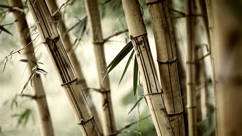 Home Design 3d Download Mac bamboo new hd wallpapers 2015 high quality all hd