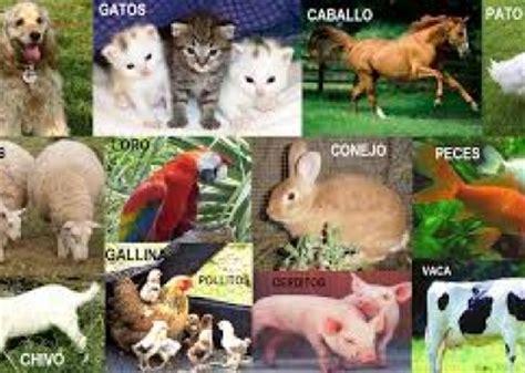 imagenes de animales utiles los animales son seres vivos no mercanc 237 as el