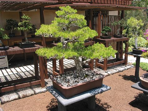 garden design bonsai garden