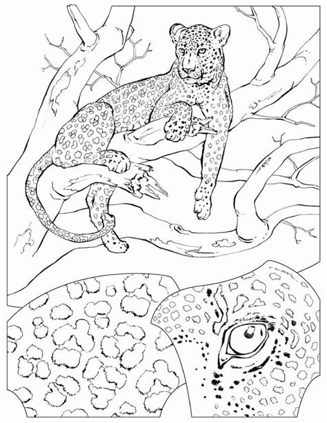 coloring pages of animals in their habitats africa animal coloring pages animal habitat study