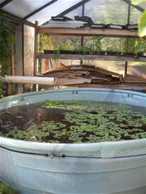 backyard tilapia farming hydroponics on hydroponics hydroponic