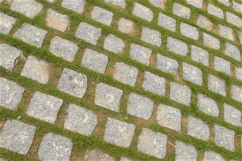 how to get rid of moss on patio stones how to get rid of algae moss in paver cracks home guides sf gate