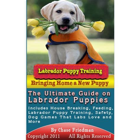 labrador retriever the beginner s guide to your labrador retriever puppy books akc silver labrador retriever akc silver 1923 d silver