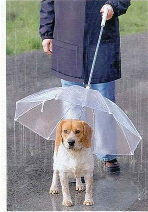 puppy umbrella cool products leash umbrella dump a day