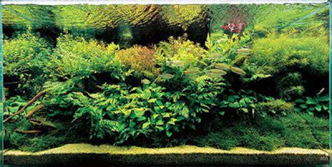 contoh desain aquascape nature aquascaping desain aquascape