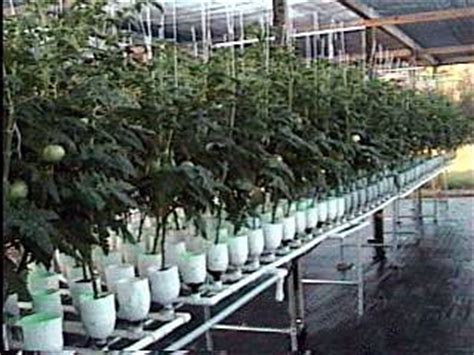 Vertical Hydro Garden 67 Best Images About Hydroponics On Indoor