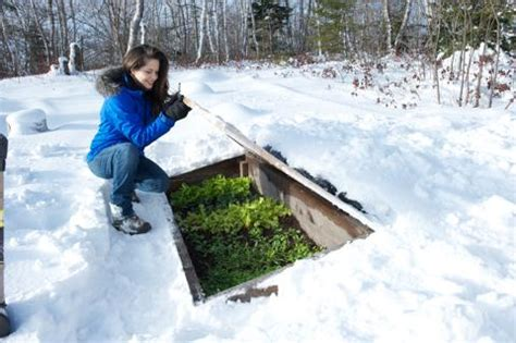 Backyard Winter The Amazing Cold Frame