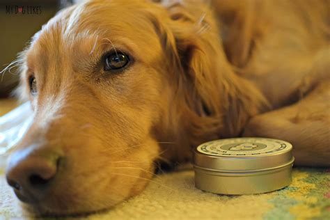 walter s dogs walter s balm soothing a nose and cracked paws