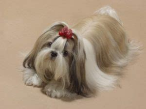 shih tzu throwing up yellow foam names for shih tzu puppies 1001doggy