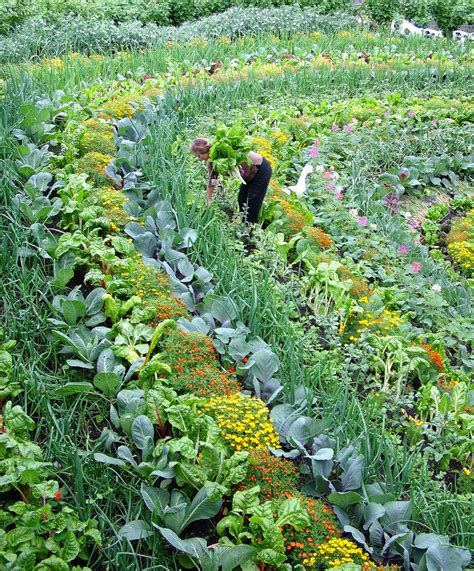 Beautiful Vegetable Garden Pictures Most Beautiful Garden I Ve Seen Content In A Cottage