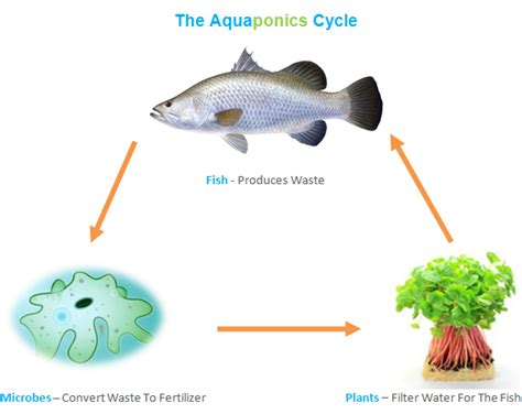 home diy aquaponics review