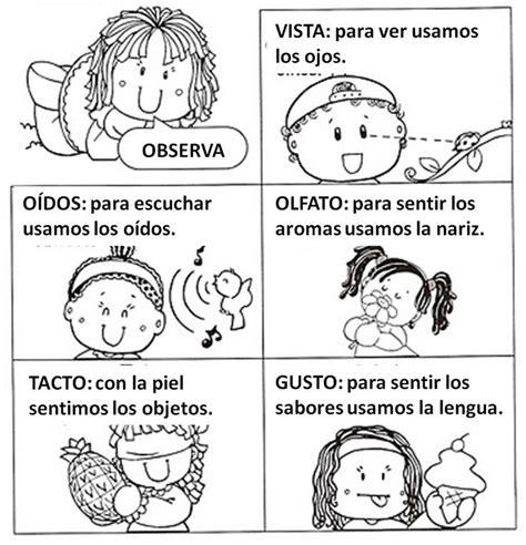 imagenes infantiles sobre los sentidos 17 mejores ideas sobre los cinco sentidos en preescolar en