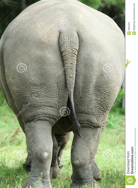 White Rhinoceros Rear View Stock Photos - Image: 5805463