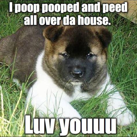 Puppy Meme - pup memes oldpups