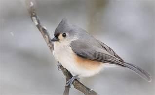 birds thomas prince school nature trails