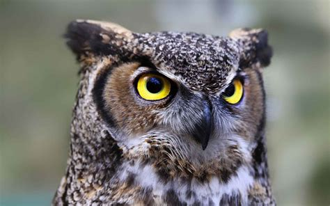 let s learn about unique birds letã s learn about animals books owl symbolism learn meanings and why they re