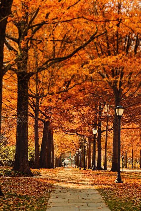 street pathway leaf  photo  pixabay