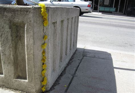 Planter Boxes Toronto by Colorful And Tree Planter Brightens Up Toronto