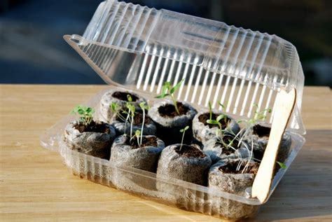 how to make a green house make a mini greenhouse with recycled items new england today