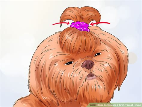 how to groom a shih tzu at home 4 ways to groom a shih tzu at home wikihow