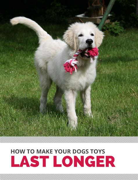 how to keep dog toys from going under the couch 4 simple ways to make your dogs toys last longer puppy leaks