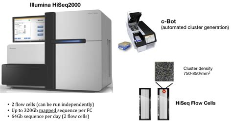 illumina hiseq 2000 qbi centre for brain genomics queensland brain institute