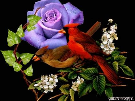 birds with rose 3d and cg wallpaper id 1517262 desktop