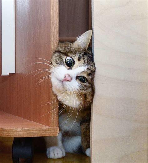 cat   disability   facial expressions