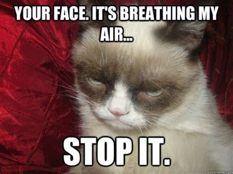 Funny Grumpy Cat Meme - top 10 funniest summer grumpy cat memes into the wild