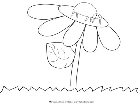 ladybug life cycle coloring page kid color pages ladybug life cycle homeschool all ages