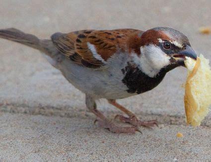 what kitchen scraps can birds eat