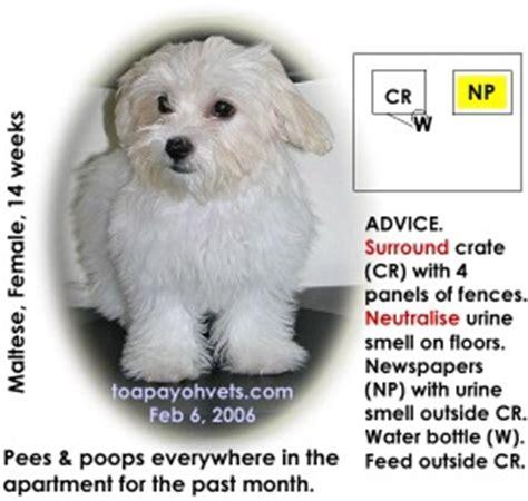constipated puppy 3 weeks 031208asingapore toa payoh veterinary cat rabbits hamster veterinarian veterinary
