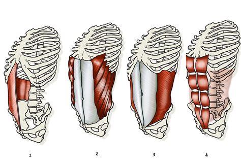 cuales son las cadenas musculares pdf 10 ejercicios para trabajar el core fitness triatlonweb es