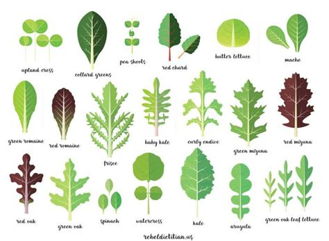 green vegetables p list of green vegetables search salads