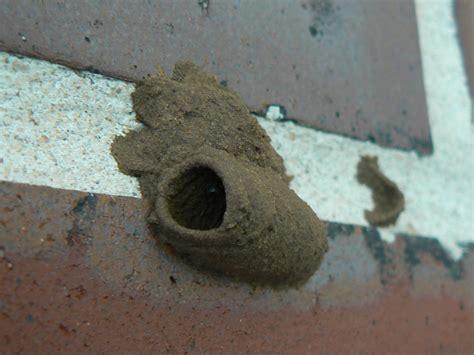 Termite Spray Canada