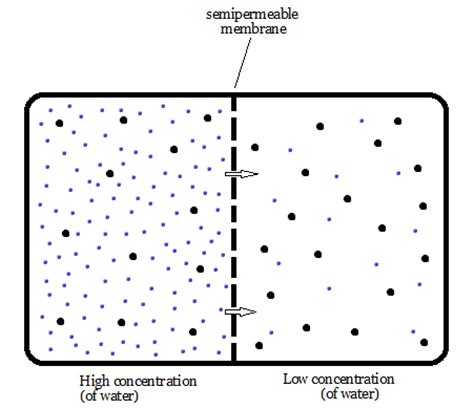 osmosis diagram how does osmosis relate to solute concentration socratic