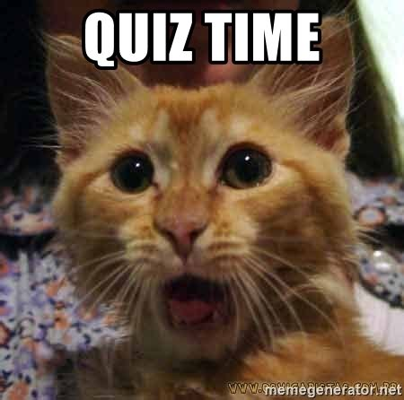 Quiz Meme - quiz time crazy cat meme generator