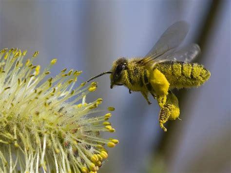 honey bee  beautiful