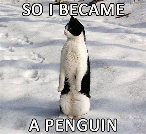 Cute Penguin Meme - they said i could be anything 16 pics
