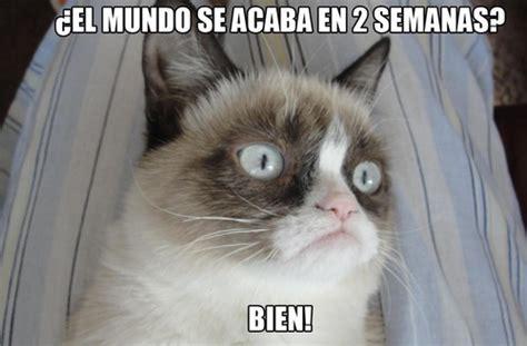 Gato Meme - memes locos y graciosos car interior design