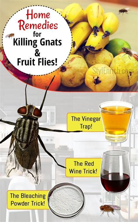 how to get rid of gnats fruit flies using simple home