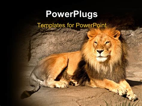 template powerpoint lion powerpoint template a lion with stones in the background