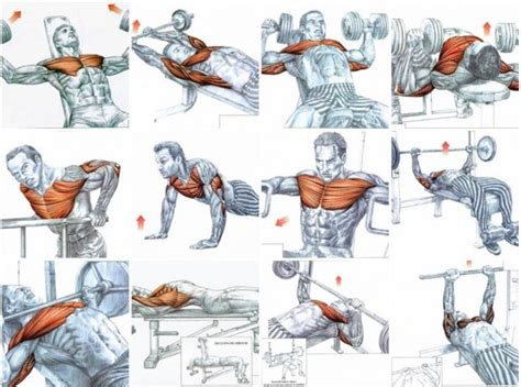 gain chest using only 3 effective exercises charts tr 228 ning tr 228 na