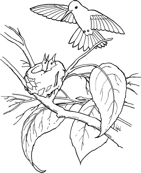 coloring page hummingbird free printable hummingbird coloring pages for
