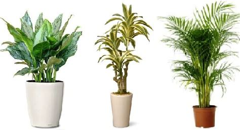 best indoor plants for no sunlight 77 best top 10 wiki nurserylive com images on pinterest