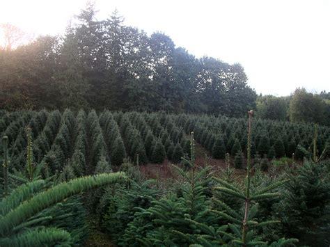 pine meadows christmas tree farm pine tree farms ltd bc farm fresh