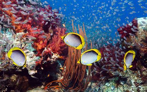 winterpflanzen für den garten 2379 die 54 besten aquarium hintergrundbilder